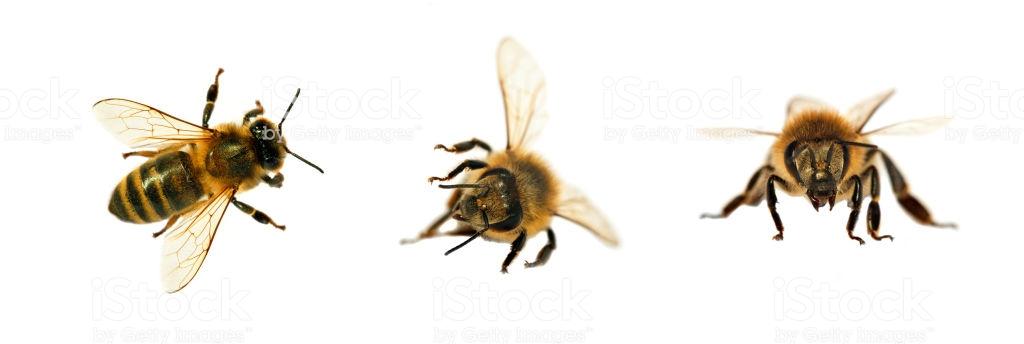 Un essaim d'abeilles ?